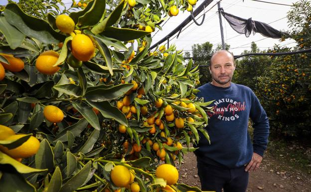 Naranjas de la China. El kumquat, una fruta con futuro.