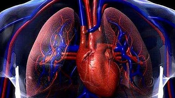Cómo fortalecer los vasos sanguíneos con estos alimentos que tienes ...